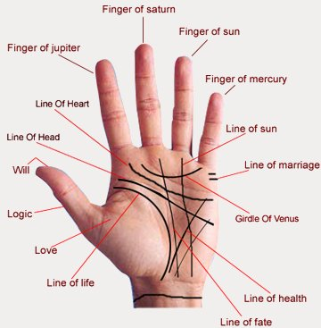 Know Major Palm Lines
